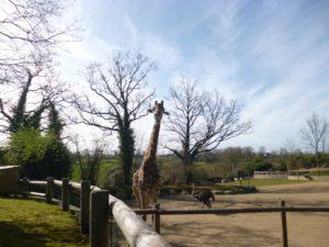 Visite-du-zoo-de-Champrepus-CP-2