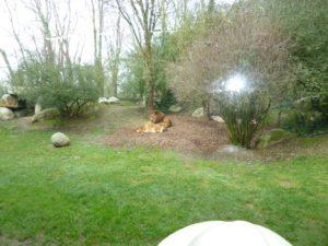 Visite-du-zoo-de-Champrepus-CP-6