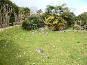 Visite-du-zoo-de-Champrepus-CP-9